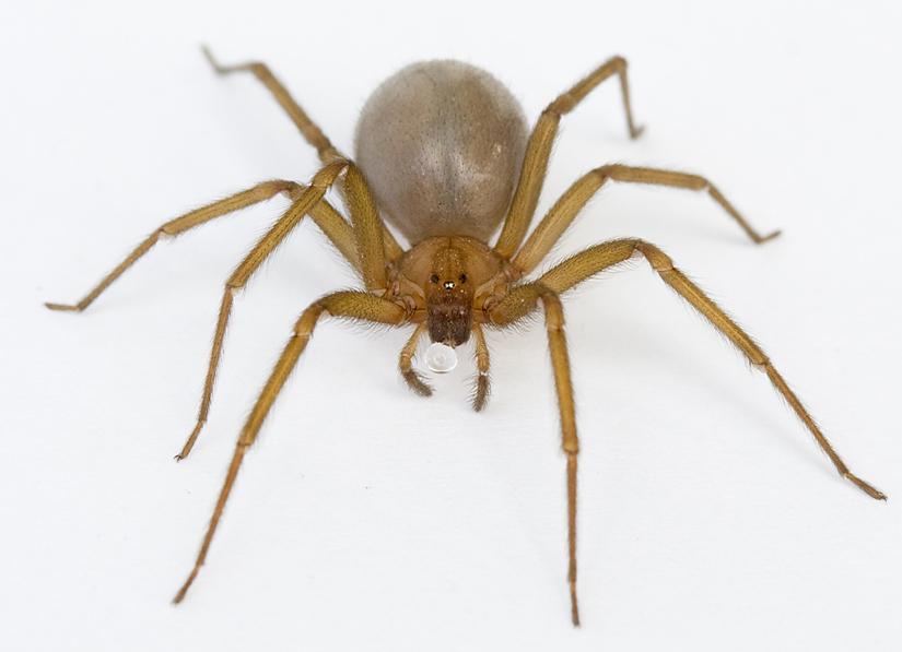 Las 5 ara as mas venenosas del planeta la reserva - Insectos en casa fotos ...