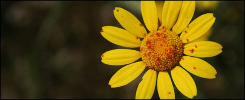Flickr - daniele muscetta