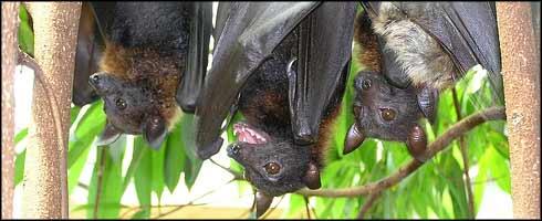 Animales: Peligro de extinción!