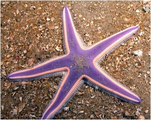 Las Estrellas De Mar Más Bonitas Del Planeta Lareservacom