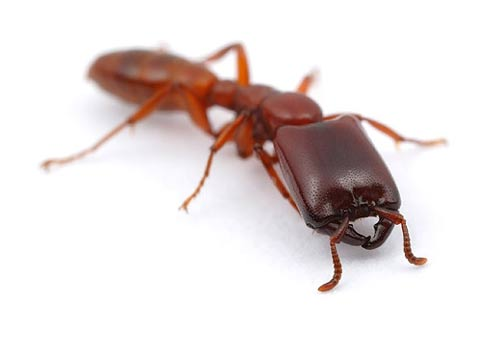 La diversidad de las hormigas...