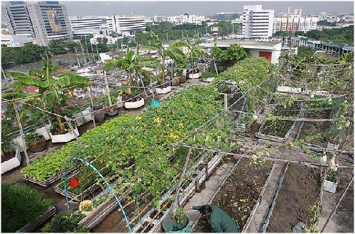 la agricultura urbana es un espacio que puede ser compartido en familia con vecinos o grupos afines distribuyendo tareas relacionadas al huerto tales como - Huertos En Terrazas