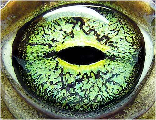 Macros de Ojos [HD]
