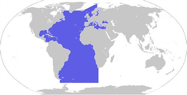 Los 5 océanos de la Tierra | La Reserva