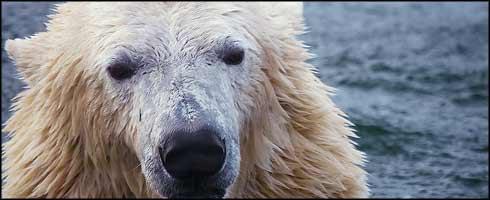 Mape - Flickr - Galer�a Fotografica - Lista Roja de Especies en Peligro de Extincion