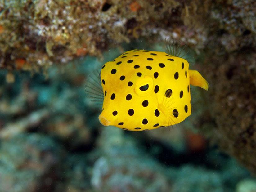 Los siete peces m s extra os del planeta la reserva - Los peces mas bonitos del mundo ...