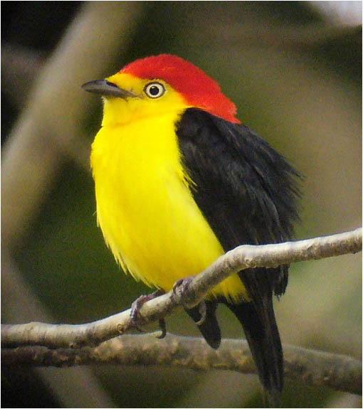 6 de las aves ms bellas del planeta  La Reserva