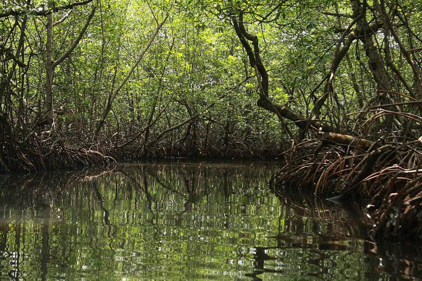 México ha perdido 10% de manglares en 25 años