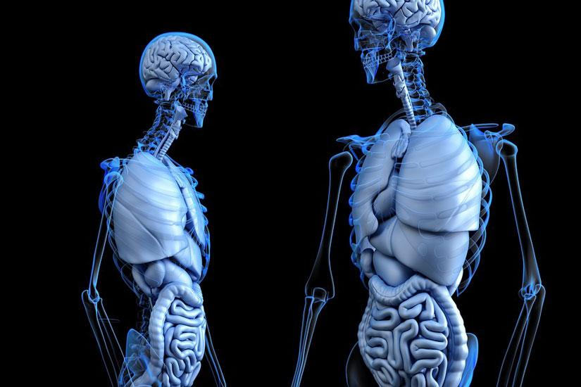 absorcion de agua y sales minerales aparato digestivo