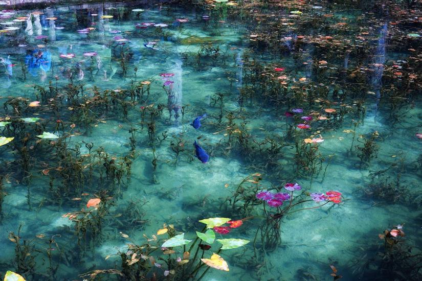 El fascinante estanque de monet en jap n la reserva for Estanque japones