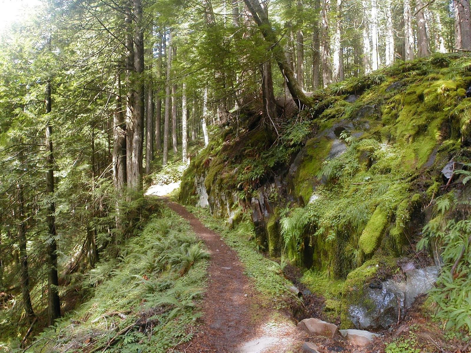 biomas terrestres bosque templado estacional la reserva. Black Bedroom Furniture Sets. Home Design Ideas