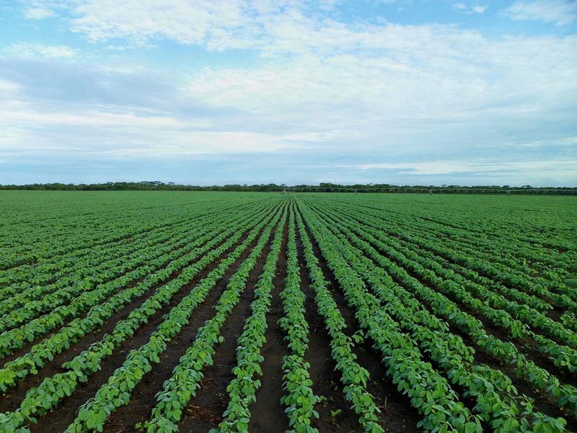 los 10 mayores productores de soja en el mundo la reserva. Black Bedroom Furniture Sets. Home Design Ideas