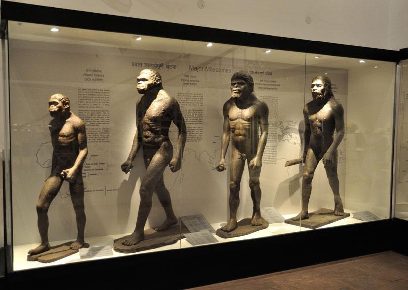 La teoría de la evolución | La Reserva