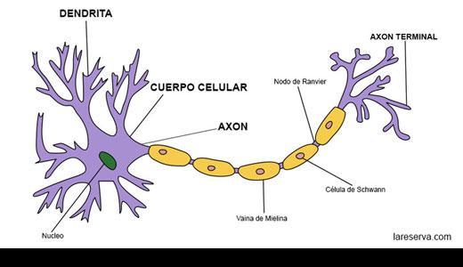10.000 neuronas por día | La Reserva