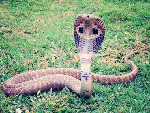 La Anaconda la serpiente mas grande del mundo  La Reserva